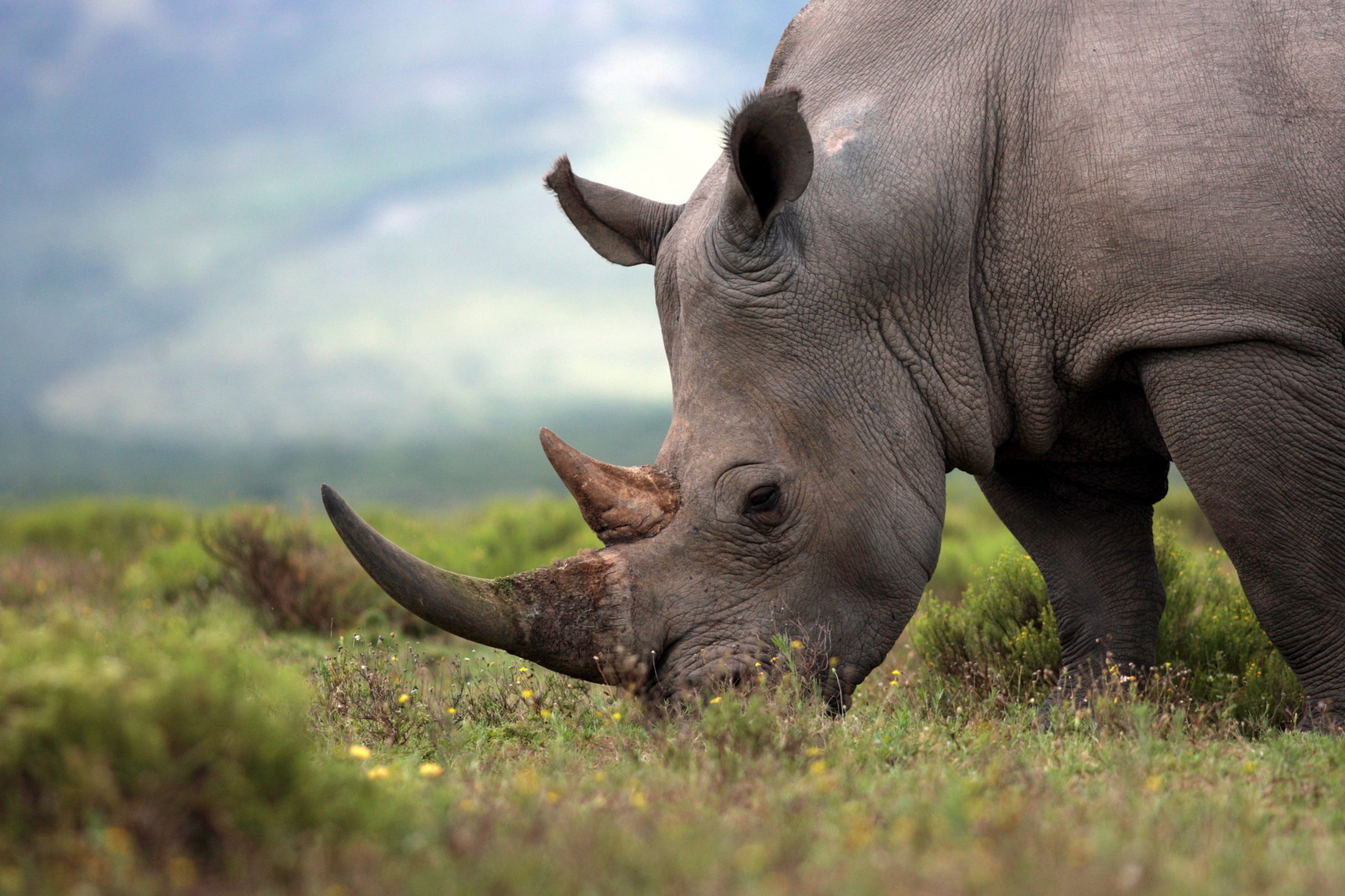 AFRICA: Rhino bonds to be issued by 2020 to protect